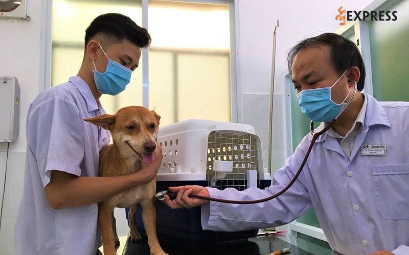 saigonpet-veterinary-clinic-35express